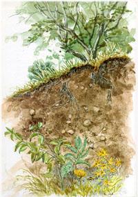 Gezeichnetes Bodenprofil